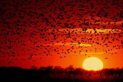 250px-Sonne.Sonnenuntergang.Vogel.Blackbird-sunset-03.jpg?width=200