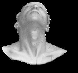 pectoralis major muscle diagram under chin muscle diagram nackenübungen – yogawiki
