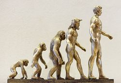 Evolution Adaptation Affe Mensch.jpg