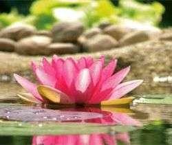 250px-Ayurveda-Lotus.jpg?width=200