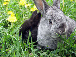 Bunny-in-the-grass.jpg