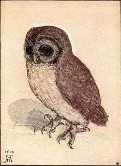 Albrecht Dürer - The Little Owl - WGA7367.jpg